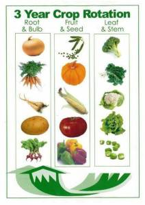 3 Year Crop Rotation Idea